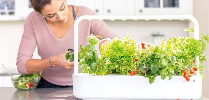 Smarte Kräutergärten mit Beleuchtung – entspannt ganzjährig Züchten