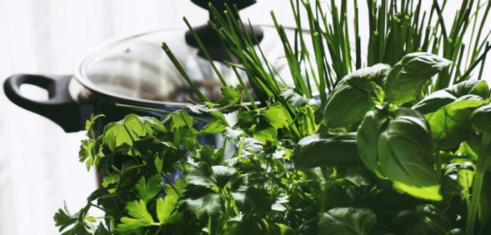 Frische Kräuter ganzjährig im eigenen Heim züchten & ernten